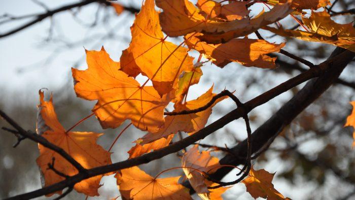 autumn_forest5_uhd-700x394