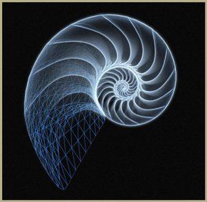 nautilus-jpg1